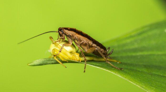 scarafaggi in giardino